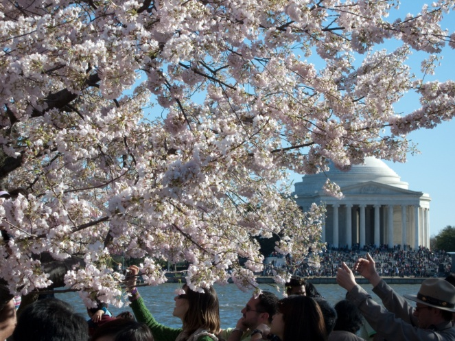 WOW at the 2015 Cherry BlossomParade